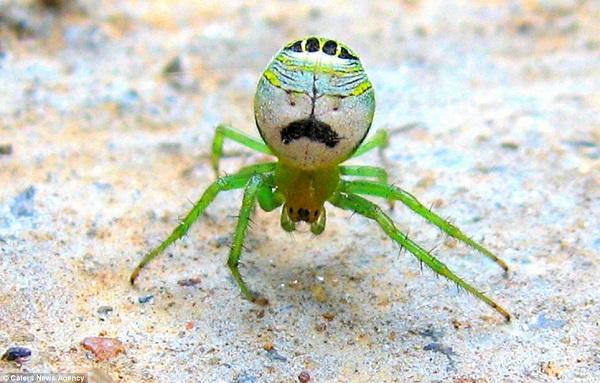 Idén a zöld harisnya a divat. Tetszik? Ez a kis fickó elég bizonytalan sikkes megjelenése miatt.