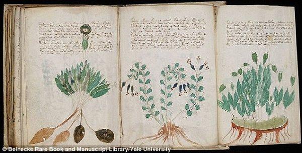 Stephen Bax, a Bedfordshire Egyetem nyelvész professzora dekódolt a Voynich-kéziratban szereplő jó néhány szót és először ő azonosított növényeket.