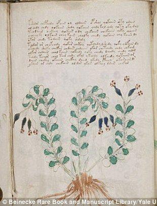 Amerikai botanikusok szerint, a Voynich kéziratban illusztrált 303 növényből legalább 37 Dél-Amerikában termesztett.