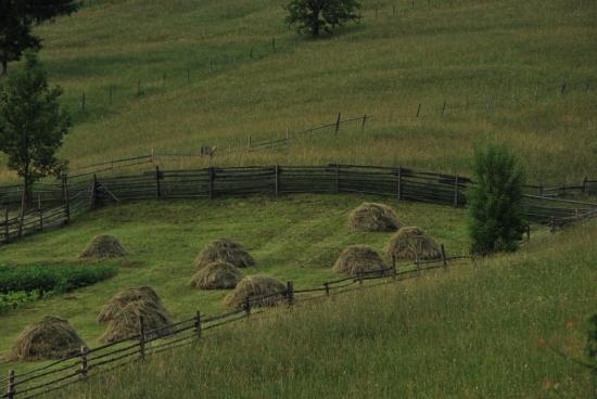 Ha a széna boglyában van, akkor az eső lefolyik a fűszálakon és nem vesz kárba a sok munka.
