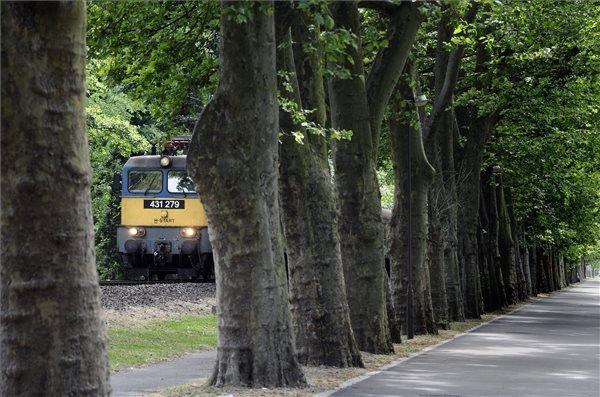 Egy V43-as mozdony halad a balatonföldvári védett platánsor alatt 2015. június 16-án.
